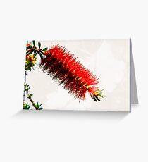 Callistemon Greeting Card