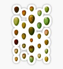 Lovely colorful wild egg collection Sticker