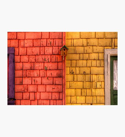 Color Blind Birds Photographic Print