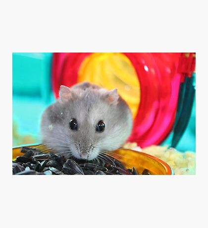 Hammie Photographic Print