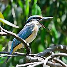 Kingfisher Healesville by Tom Newman