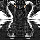 Swans in Love by Ian Elmes
