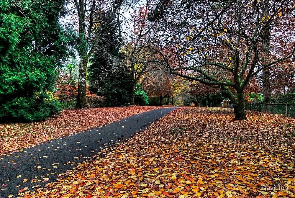 Autumn Wonderland | Mt Mount Wilson | NSW | The Blue Mountains | Australia by DavidIori