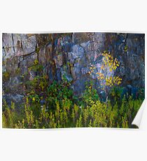 Leaves on Rock Poster