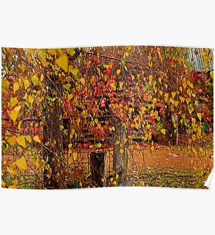 Autumn Colours 1 Poster