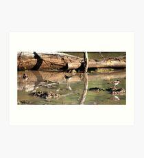 Waterbirds Art Print