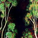 Trees - Nightfall by Linda Callaghan