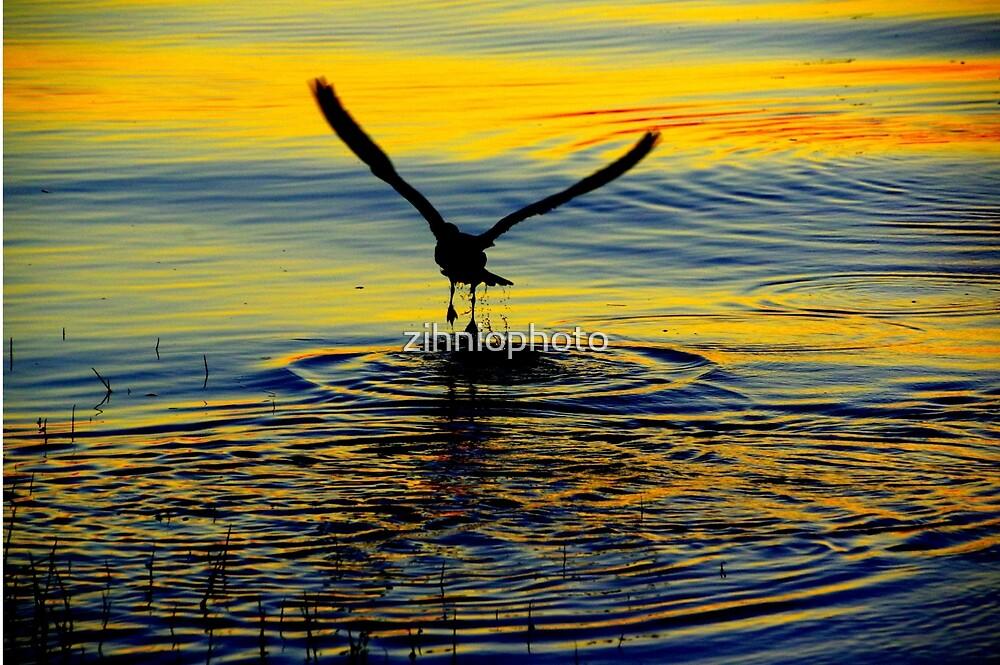 Seagull by zihniophoto