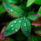 Leaf with water drops by Siddhesh Rishi