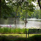 Swan Lake by Debbie Cato