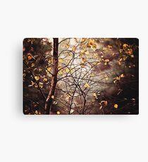 Last days of Autumn Canvas Print