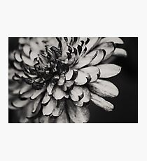 Clematis Photographic Print