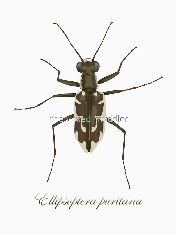 Puritan tiger beetle, Ellipsoptera puritana by thevexedmuddler