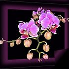 Orchid by hary60