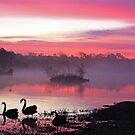 Sunrise on Golden Pond by Maurie Alderson