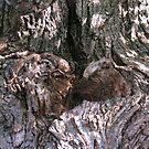 old bark'er by Fiery-Fire