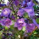 Jacaranda Delight by Lozzar Flowers & Art