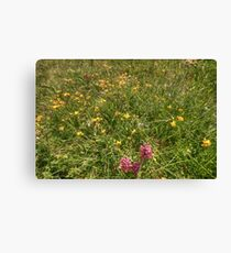 Burren Flowers Canvas Print