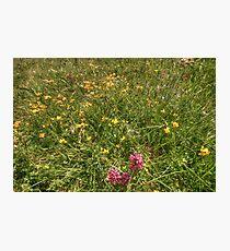 Burren Flowers Photographic Print