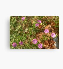 Beautiful Burren Flowers Canvas Print