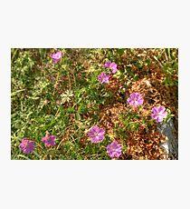 Beautiful Burren Flowers Photographic Print