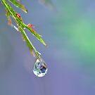 Zen Droplet by jayneeldred