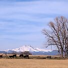 Colorado Springtime Cattle by Bo Insogna