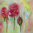 Transitions-Rose von bevmorgan