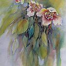 Lenten Roses von bevmorgan