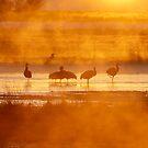 Sunrise and cranes at the wildlife refuge by Eivor Kuchta