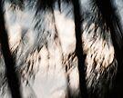 Canopy #03 by LouD