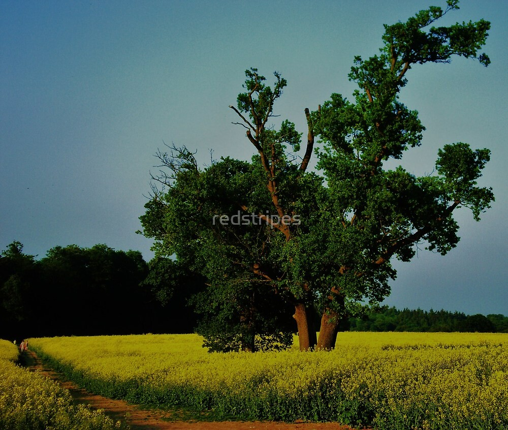 Solitude #2 by redstripes