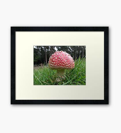 Lovely to look at, delightful to see, but eat me.. and how sick will you be.. Framed Print