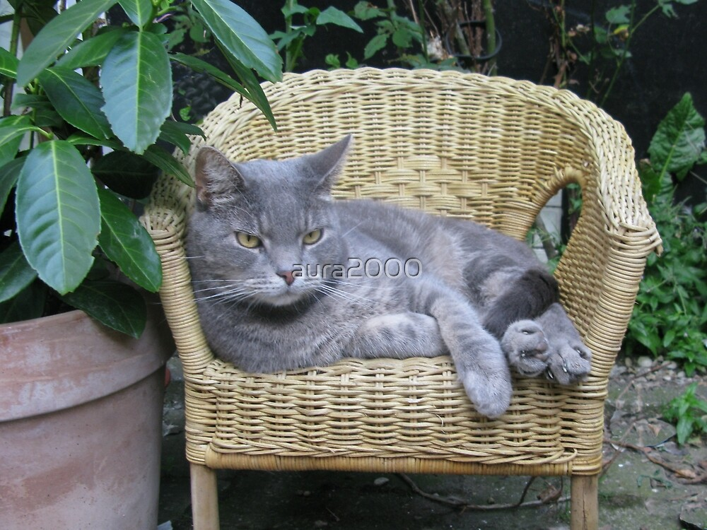 Cat on a kid's chair in the garden by aura2000