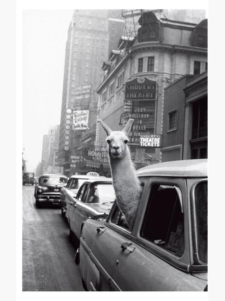 New York Lama von ToastCrumbs
