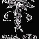 Old Growth Alchemy Mandrake Skirt by Maureen Eckert