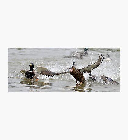 Crazy Duck Photographic Print