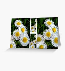 Fleabane Fiasco Greeting Card