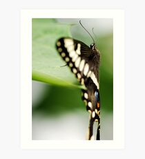 Gentle Beauty Art Print