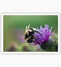 Scruffy Old Bumble Bee macro Sticker