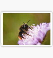 Pollen Covered Bee macro Sticker