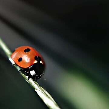Ladybug Light by InspiraImage