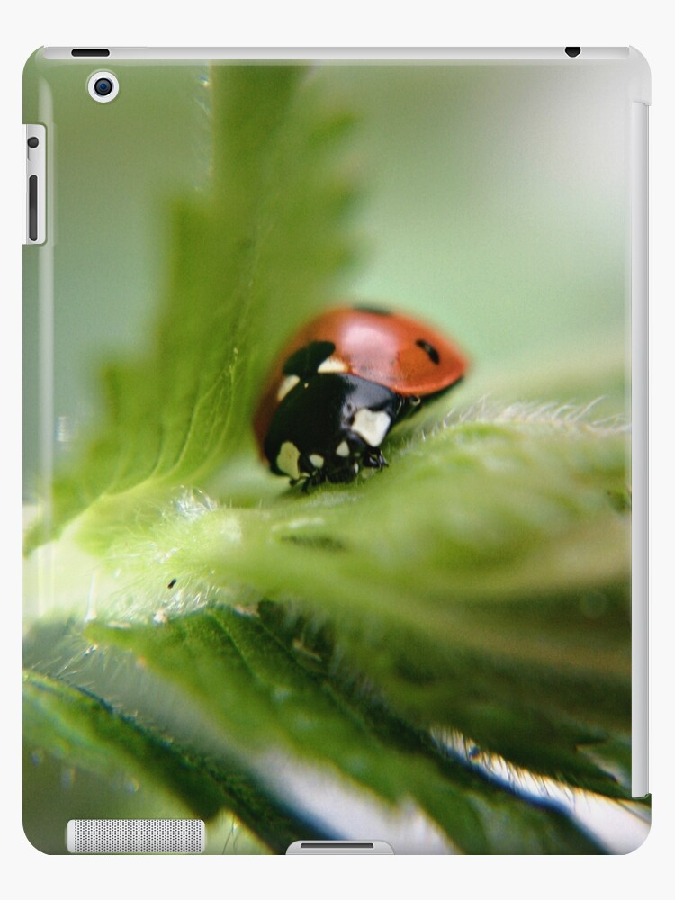 Ladybug on leaf by Vicki Field