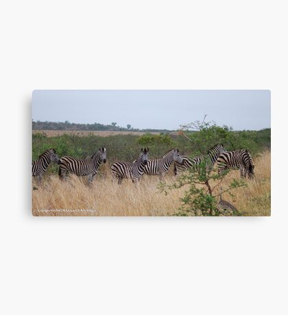 FOLLOW THE LEADER... A WONDERFUL SIGHT ! Canvas Print