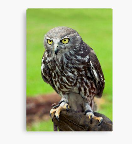 Green Eyes - barking owl Canvas Print