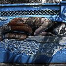 Sleeping Girl by Roddy Atkinson