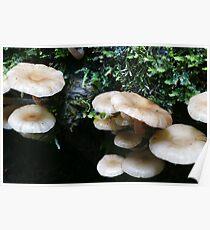 Maits Rest fungi #3 Poster