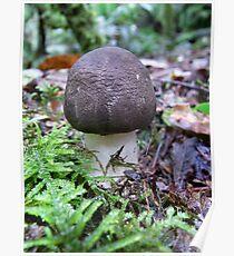 Maits Rest fungi #2 Poster