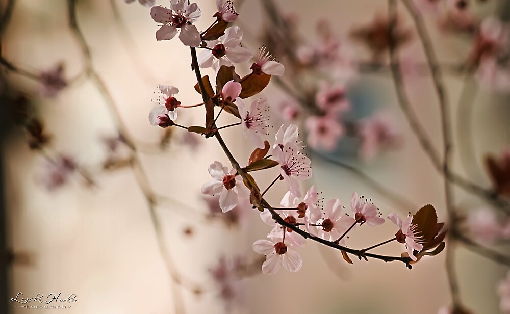 Spring Romance by Leasha Hooker