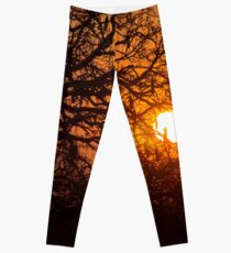 Sultry sun setting behind the sausage tree Leggings